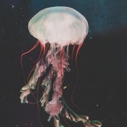 水母 触手 海洋生物 浮游
