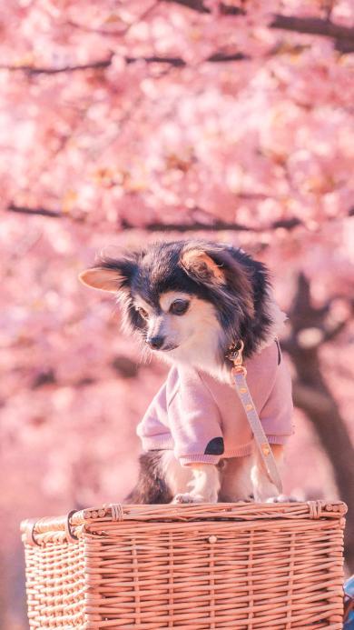 狗 汪星人 犬 宠物 粉色 竹筐