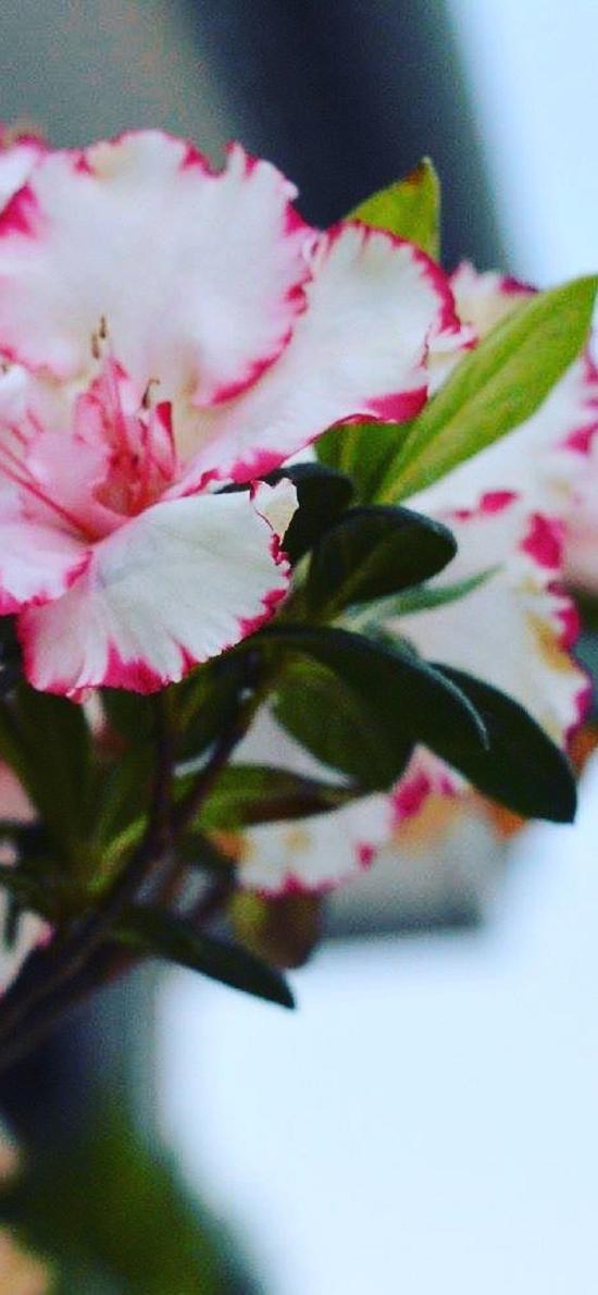鲜花 盛开 花簇 渐变