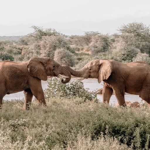 大象 野外 草地 河岸