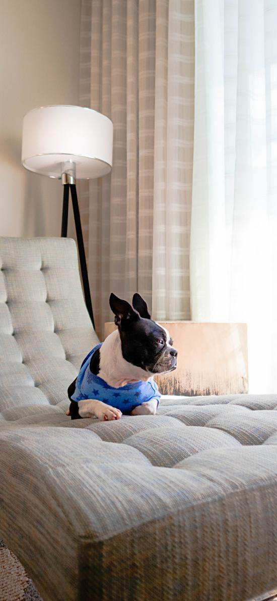 沙发 斗牛 宠物 休闲