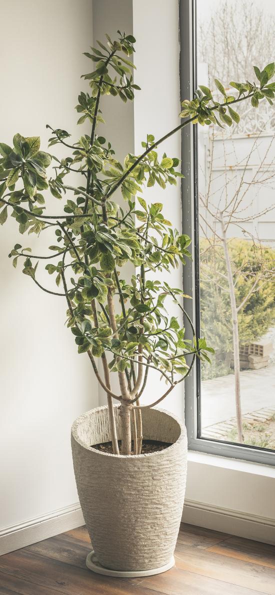家居 盆栽 觀賞 綠化
