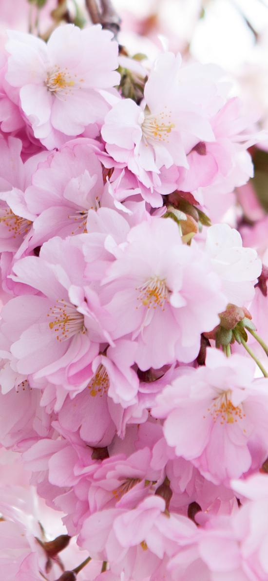 鲜花 花簇 盛开 花朵 花季