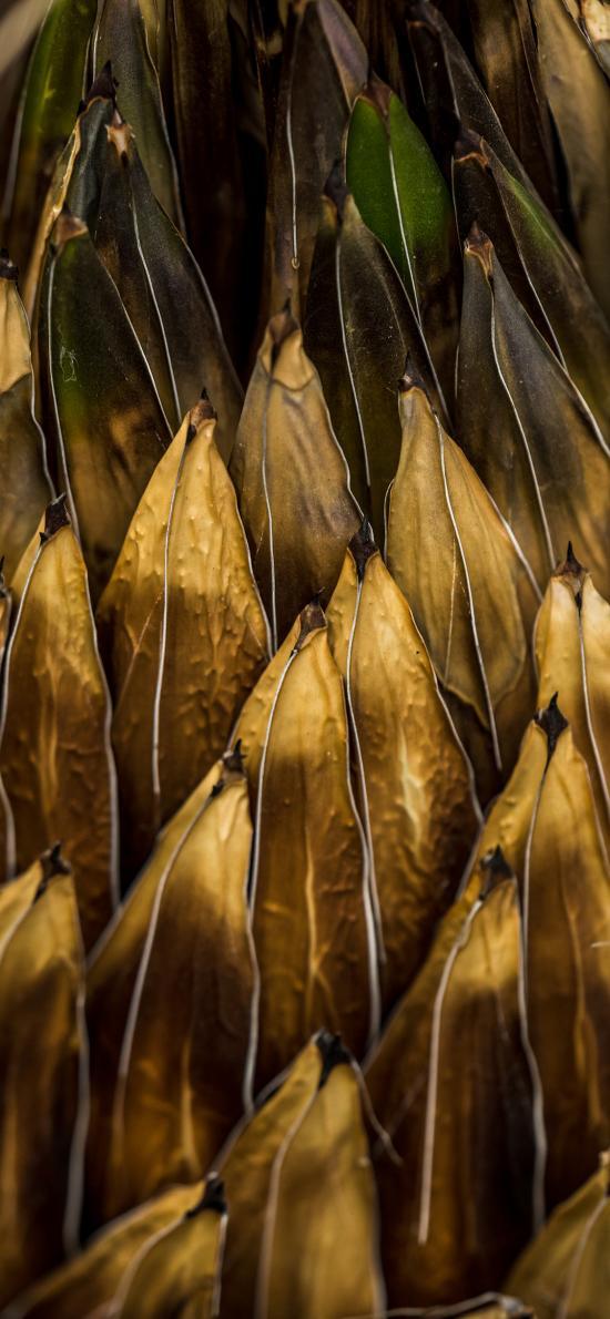 層疊 枝葉 枯黃 層次