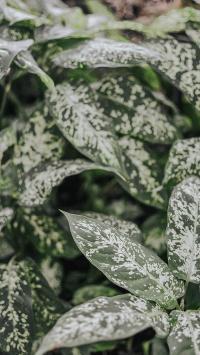 绿植 枝叶 白班 观赏