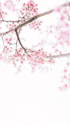 鲜花 花季 盛开 花簇 粉