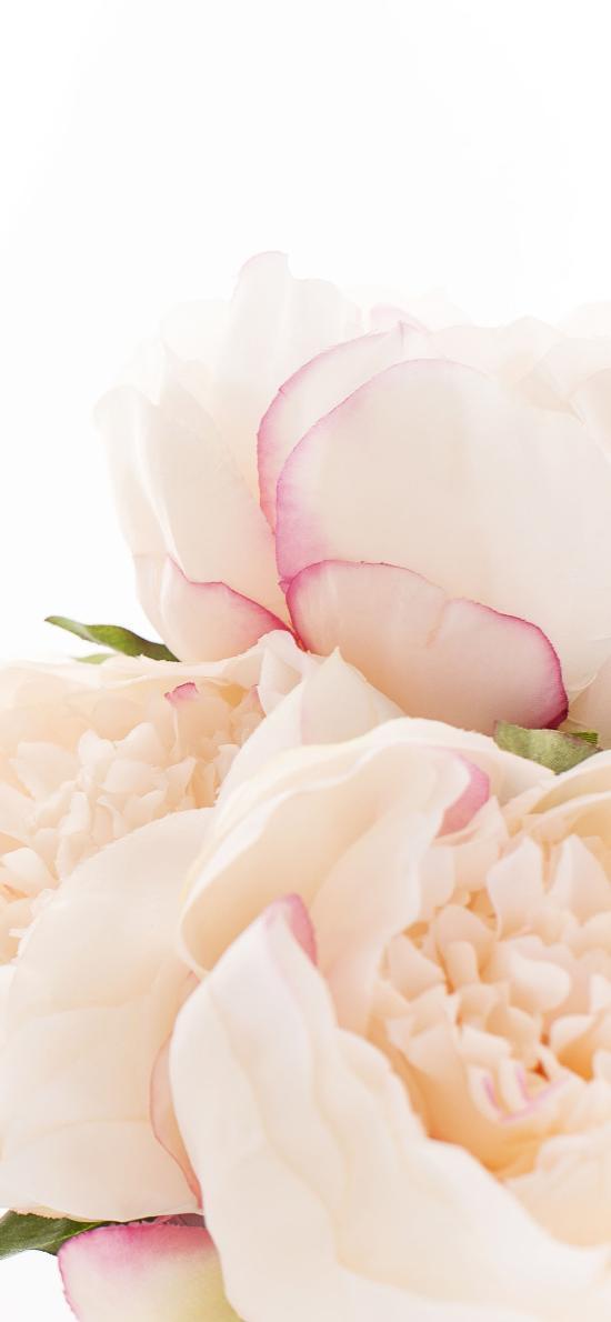 鲜花 花朵 花瓣 渐变
