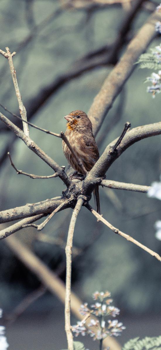 小鸟 树枝 枝头 站立