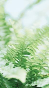 叶子 绿色 小清新 植被