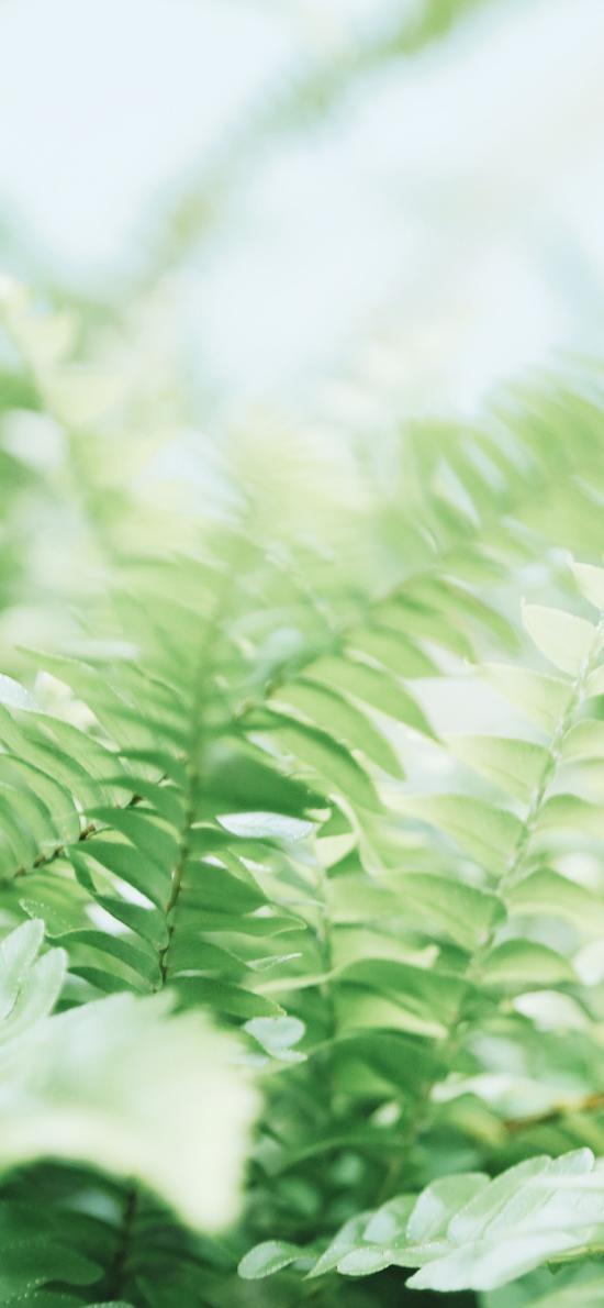 葉子 綠色 小清新 植被