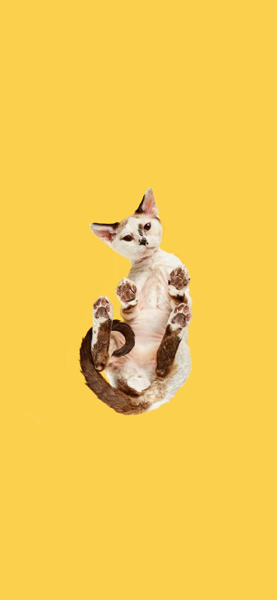 猫咪 喵星人 宠物 黄色 仰视