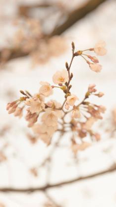 樹木 枝丫 鮮花 白色 清新