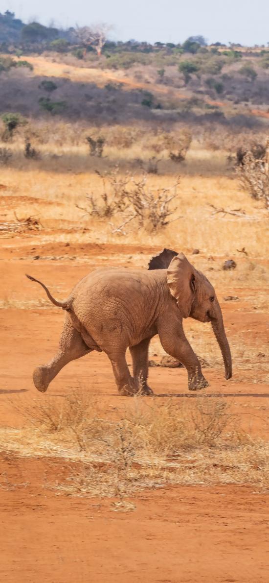 大象 野生 非洲 奔跑