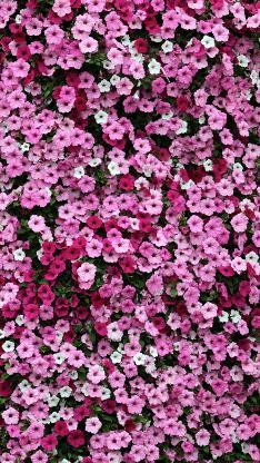 小花 鮮花 粉色 盛開 春天