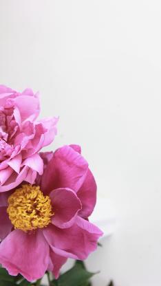 鮮花 盛開 花蕊 花瓣
