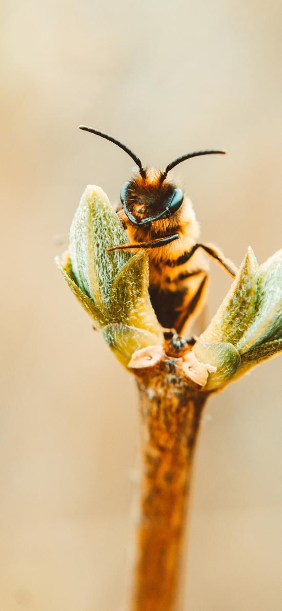 蜜蜂 采蜜 工蜂 昆虫