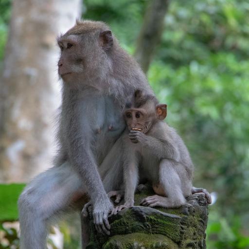 猴子 猿类 雕像 幼仔