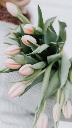 花束 鮮花 郁金香 清新
