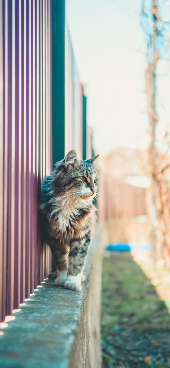 猫咪 花猫 墙沿 草地