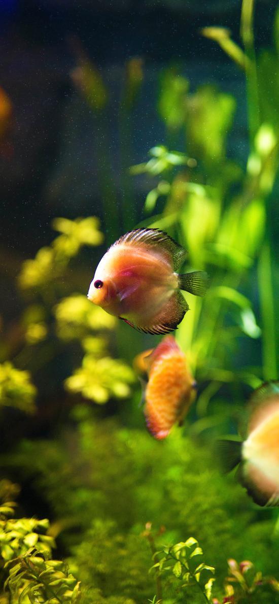观赏鱼 浴缸 水草 热带鱼
