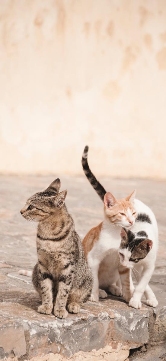 猫咪 石板 流浪猫 花色