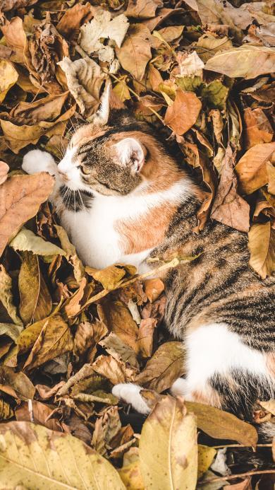 猫咪 落叶 橘猫  枯黄