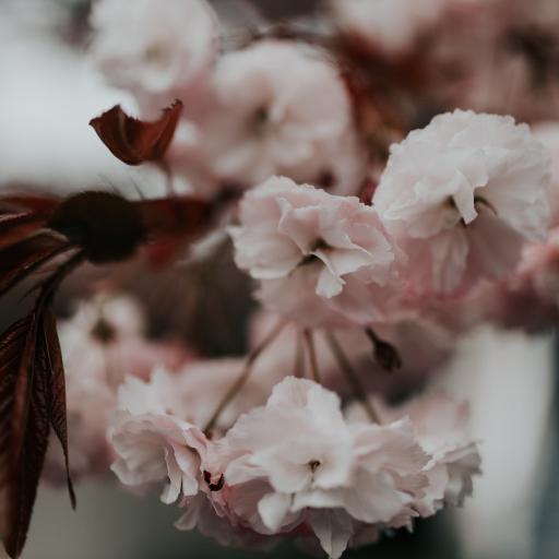鲜花 花簇 盛开 花朵