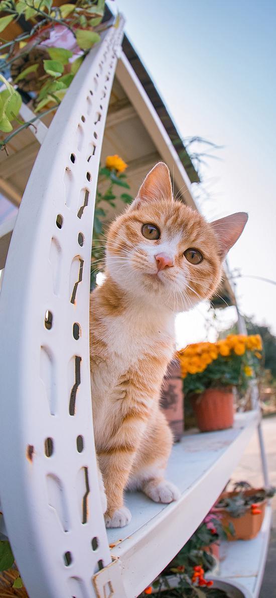 猫咪 可爱 宠物 花盆