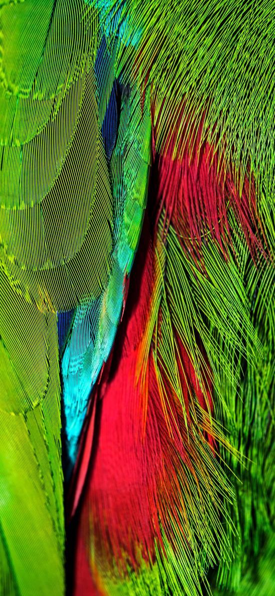 羽毛 綠色 紅色 細膩