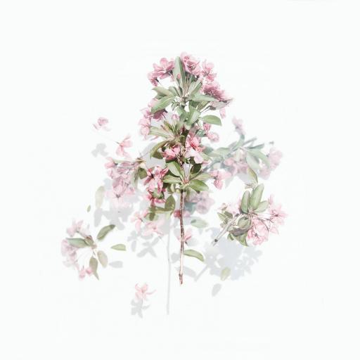 植株 鲜花 粉色 绿叶