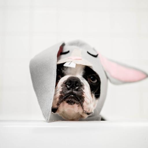 斗牛 头套 帽子 可爱 宠物