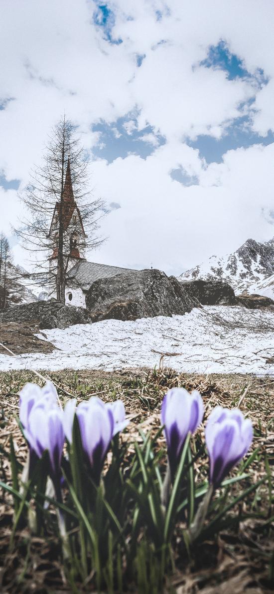 郊外 蓝天白云 树木 鲜花 紫色