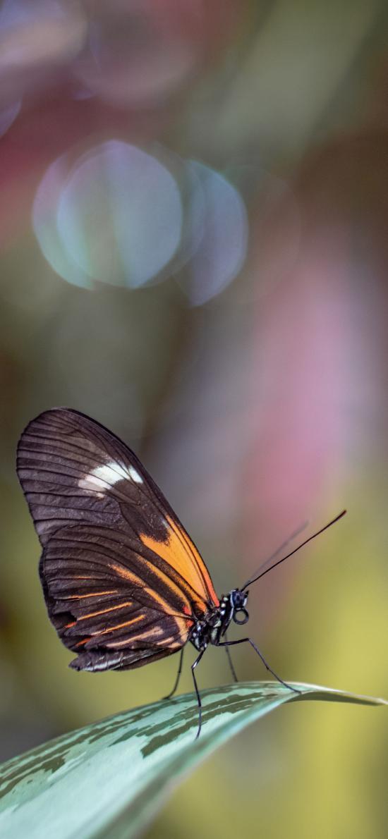 昆虫 蝴蝶 站立 飞蛾