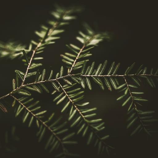树木 枝叶 绿化 护眼