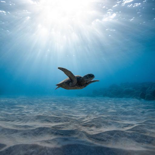 海洋 深海 海龟 游动