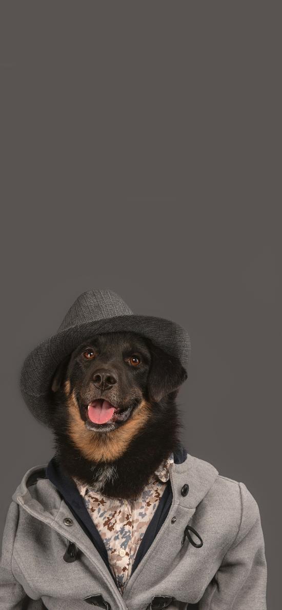 萌宠 宠物狗 写真 衣服 创意