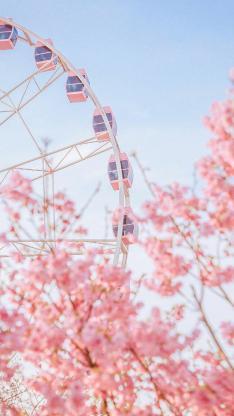 樱花 鲜花 粉色 盛开 枝头 摩天轮