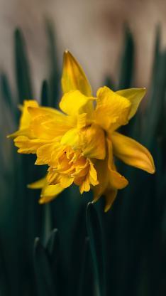 鲜花 盛开 枝叶 黄