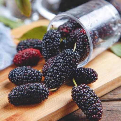 新鲜 水果 桑葚 树莓