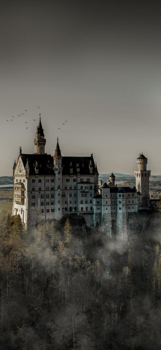 树木 城堡 神秘 飞鸟