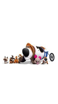 爱宠大机密2 电影 动画 宠物 猫 狗