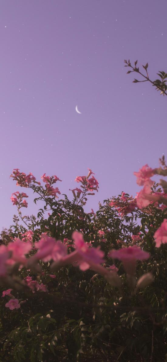 夜空 鲜花 枝叶 月亮 星空 紫色