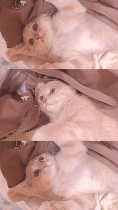 宠物 喵星人 猫咪 可爱