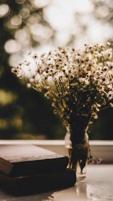 静物 花瓶 菊花 书籍
