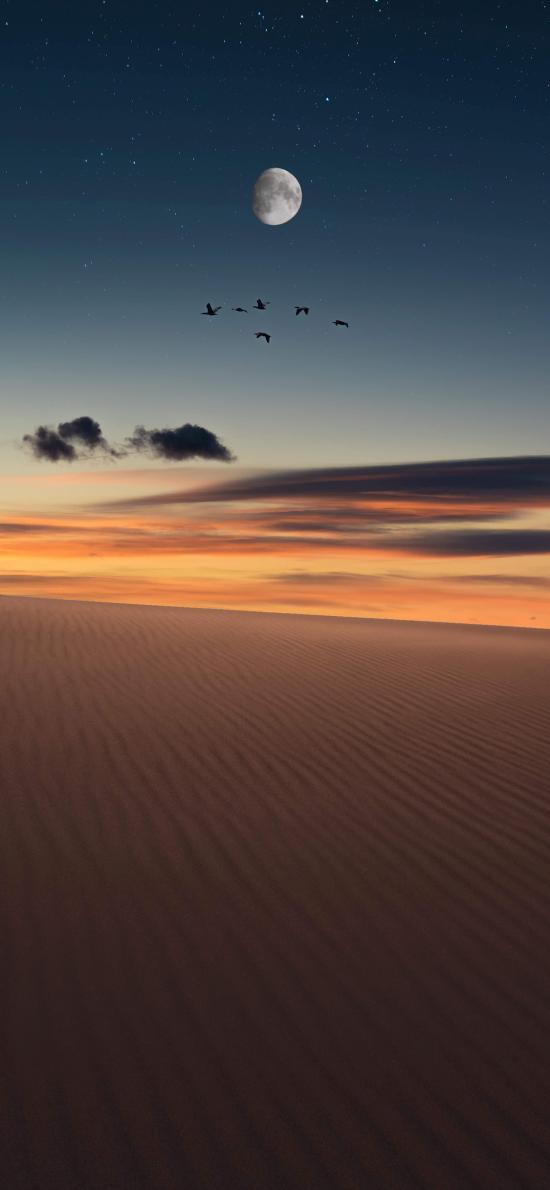 沙漠 鸟 夜空 星空 月亮