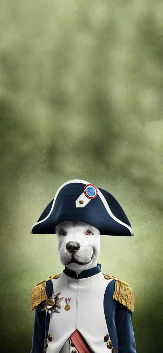 宠物狗 王星 服饰 创意写真