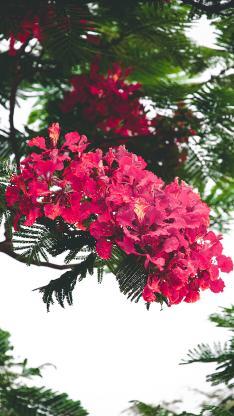 树木 鲜花 花簇 盛开 花季