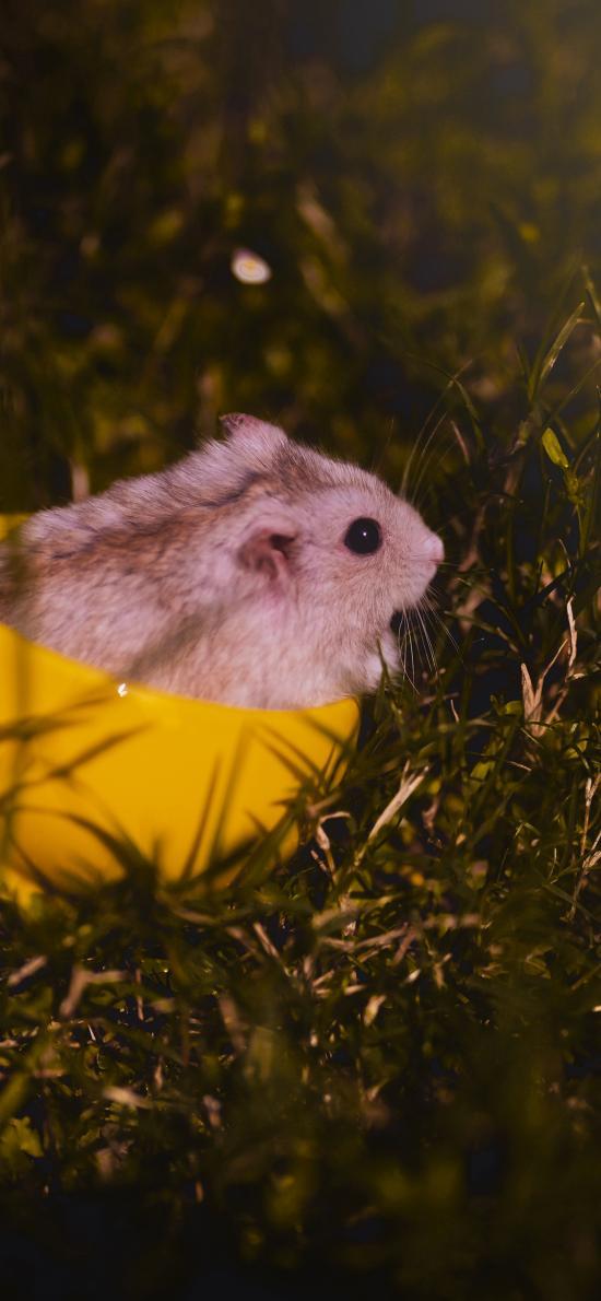 仓鼠 草地 可爱 宠物