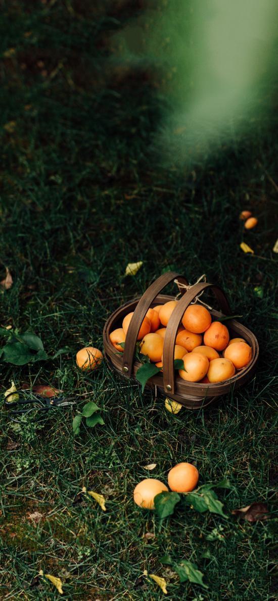 郊外 草地 篮子 杏子 黄杏 水果