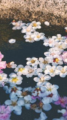 鲜花 水面 漂浮 花朵